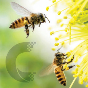 Cosmosol supports 3Bee, start up agri-tech at the service of biodiversity